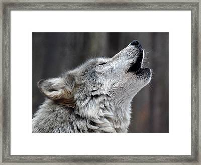 Framed Print featuring the photograph Howl by Richard Bryce and Family