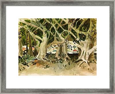 Howley's Banyans Framed Print