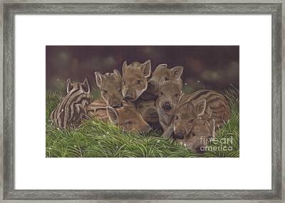 Huddle Of Humbugs Framed Print