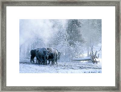 Huddled For Warmth Framed Print