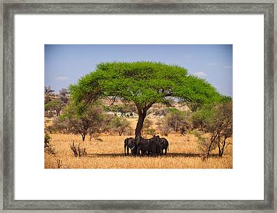 Huddled In Shade Framed Print