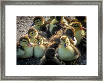 Huddled Together				 Framed Print