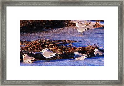 Huddling On A Winter Day  Framed Print by Eric  Schiabor