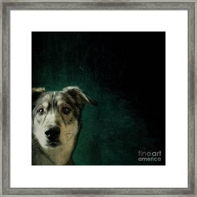 Hudson The Husky Framed Print