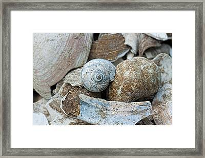 Hues Of Blue Framed Print