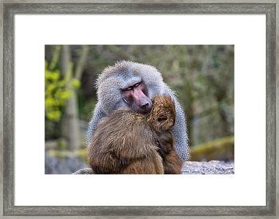 Framed Print featuring the photograph Hug Me by Scott Carruthers