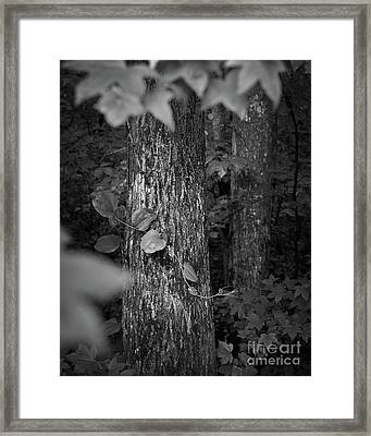 Hug Framed Print by Patrick M Lynch