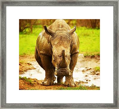 Huge South African Rhino Framed Print by Anna Om
