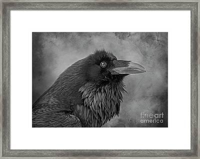 Framed Print featuring the photograph Huginn... by Nina Stavlund