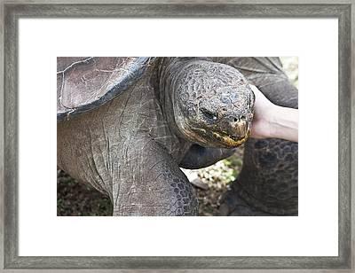 Framed Print featuring the photograph Hugo Loves Cuddles by Miroslava Jurcik