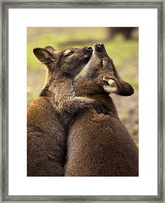 Hugs Framed Print by Mike  Dawson