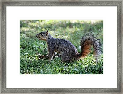 Huh Framed Print by Evelyn Patrick