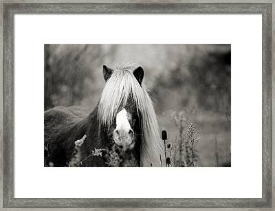 Huh? Framed Print by Thomas Shanahan