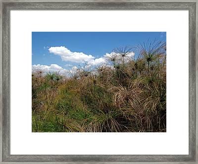 Hula Nature Reserve  4 Framed Print