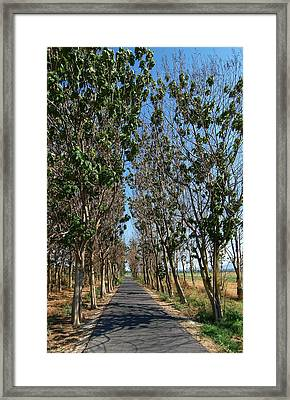 Hula Reserve Country Road Framed Print by Arik Baltinester