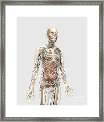 Human Body With Internal Organs Framed Print