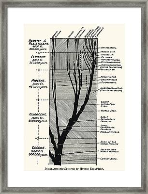 Human Evolution Framed Print by Sheila Terry