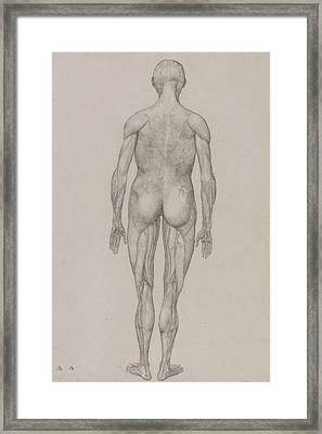 Human Figure, Posterior View Framed Print by George Stubbs