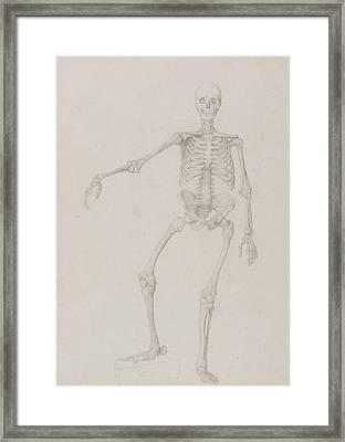 Human Skeleton, Anterior View Framed Print