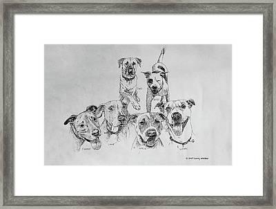 Humane Society Gang Framed Print