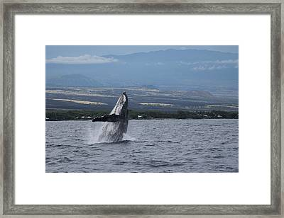 Framed Print featuring the photograph Humback Whale by Pamela Walton
