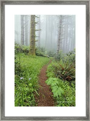 Humbug Framed Print by Scott Nelson