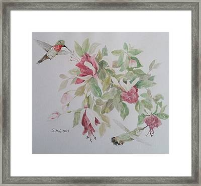 Hummer Couple On Fushia Framed Print by Sally Atchinson