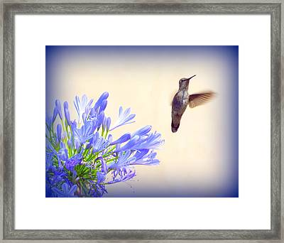 Hummer In Blue Framed Print
