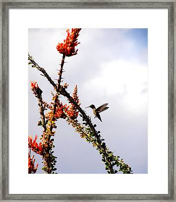 Framed Print featuring the photograph Hummer Likes Red by Jeanette Oberholtzer