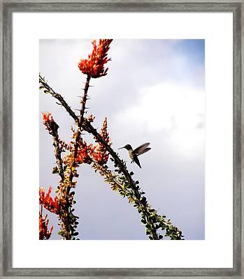 Hummer Likes Red Framed Print by Jeanette Oberholtzer