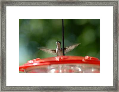 Humming Bird 71 Framed Print by Joyce StJames
