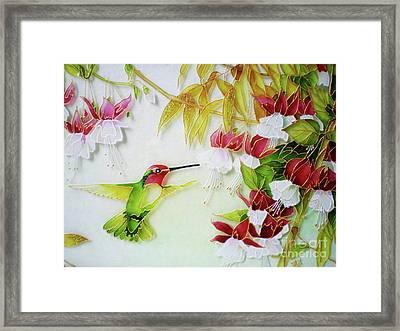 Humming Bird And Fuchsia Flowers Framed Print by Kseniia Chorna