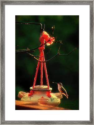 Humming Bird At Sunrise 03 Vertical Framed Print