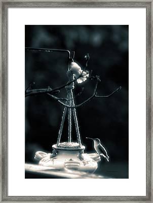 Humming Bird At Sunrise Bw Vertical 02 Framed Print