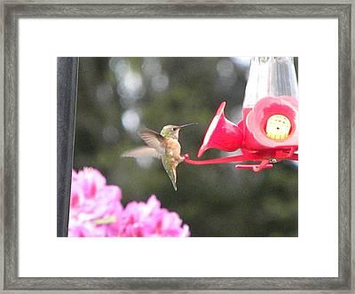 Humming Bird  Framed Print by Charles Harbaugh