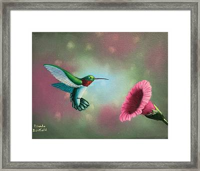 Humming Bird Feeding Framed Print