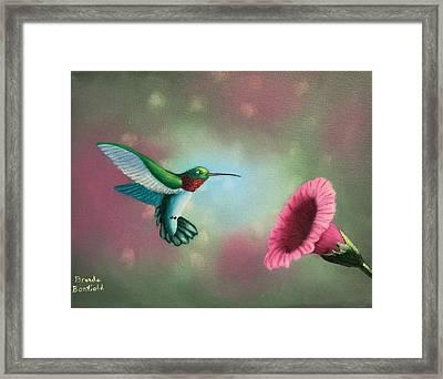 Humming Bird Feeding Framed Print