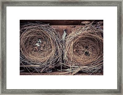 Humming Bird Nests Framed Print