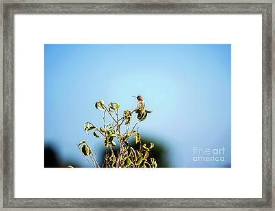 Framed Print featuring the photograph Humming Bird On A Branch by Micah May