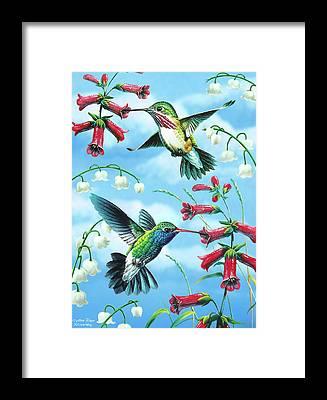 Humming Bird Framed Prints