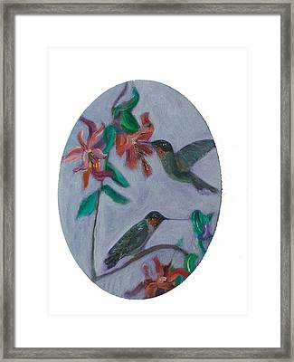 Humming Birds Framed Print by Mikki Alhart