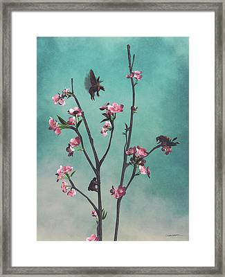 Hummingbears Framed Print by Cynthia Decker