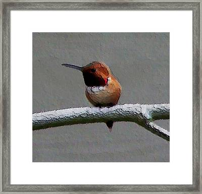 Framed Print featuring the photograph Hummingbird - Embossed by Erica Hanel