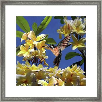 Hummingbird 01 Framed Print