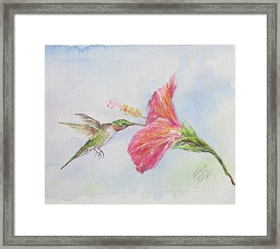Hummingbird 1 Framed Print