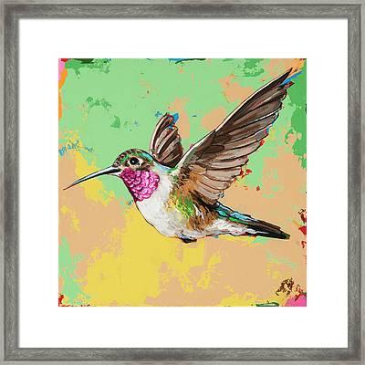 Hummingbird #21 Framed Print