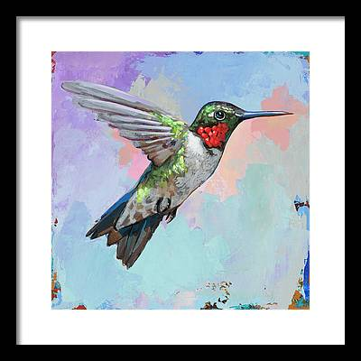 Hummingbird Framed Prints