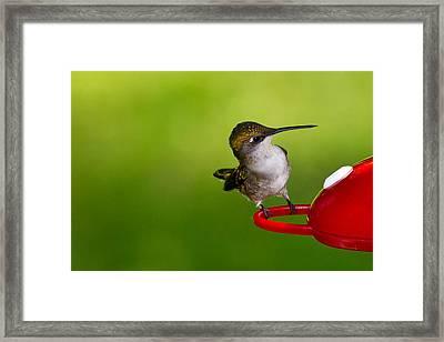 Hummingbird 5 Framed Print by Edward Myers