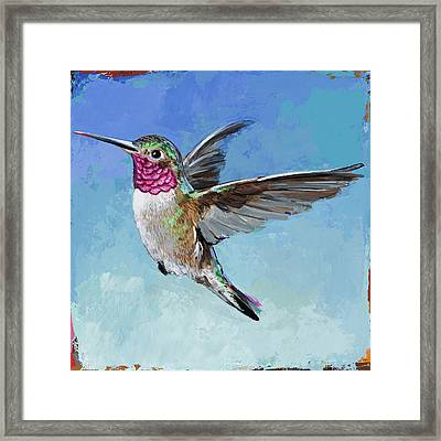 Hummingbird #6 Framed Print by David Palmer