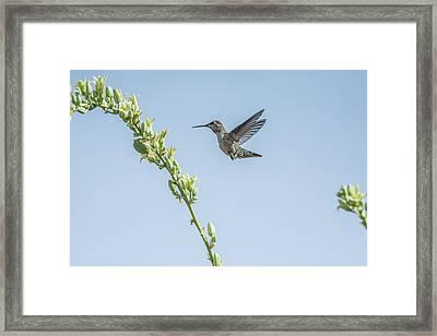 Hummingbird 7728 Framed Print by Tam Ryan
